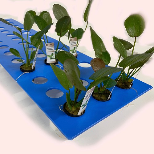 Plantenrek maatwerk