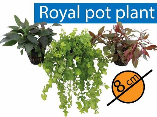 Généreux assortiment de plantes; 18 pièces!